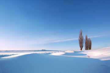 Winter landscape under the morning sun