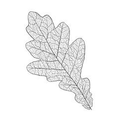 oak leaf skeleton
