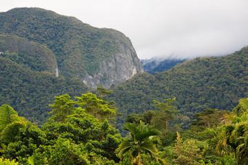 Exotic rainforest landscape