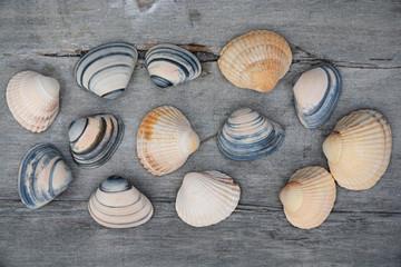Achtergrond van mooie schelpen op oud hout