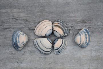 Mooie schelpen op oud hout