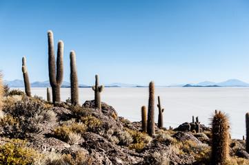 Salar de Uyuni, Isla Incahuasi, bolivia