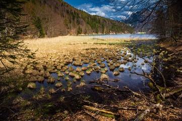 Sumpfgebiet am Alpsee in Bayern