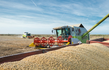 Harvesting of soy bean