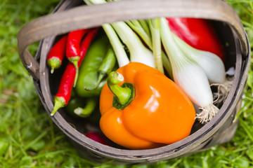 Gemüseernte, vegetable harvest