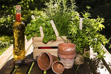 Kräuter und Kräuter in Öl, herbs and herbs in oil