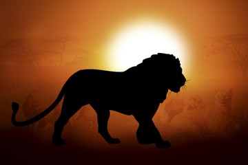 Silhouette of a lion in sunset