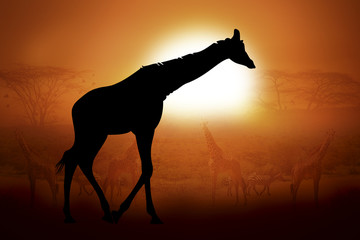 Silhouette of a giraffe in sunset