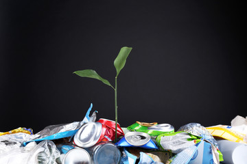 Green plant growing among cans on black background