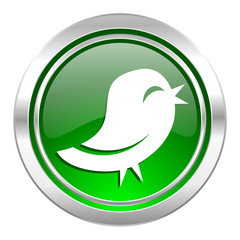 bird icon, green button