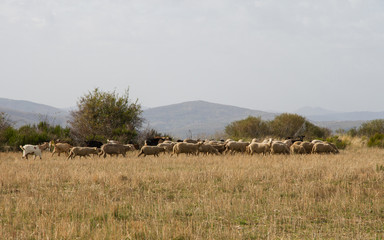 Autumnal Landscape with Sheep and Goats