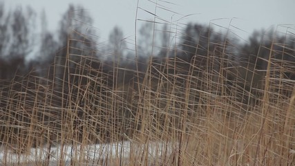 reeds sea shore cold north wind