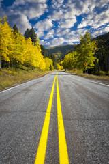 Winding Road Through an Aspen Forest