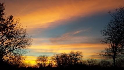 Tree framed sunset