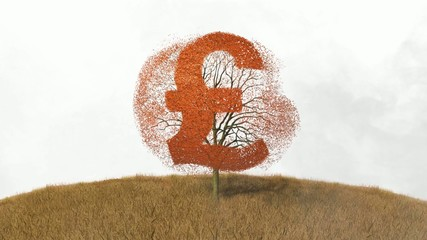pound sign on a tree