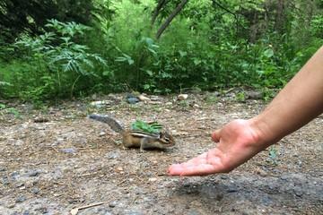 Девушка кормит с рук лесного зверька