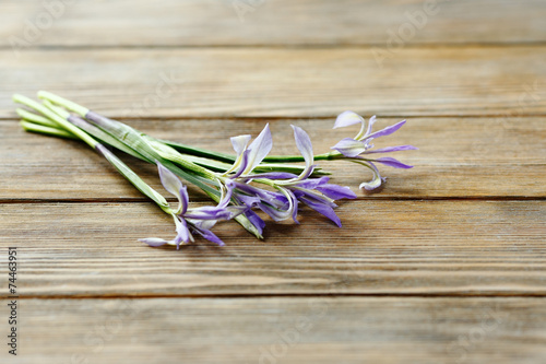 Foto op Canvas Iris Flowers on brown boards