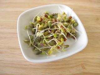 Sprossengemüse aus Linsen, Rettich, Quinoa