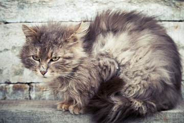 Gray homeless longhair cat sitting on a bench
