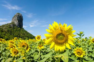 岩山と向日葵 8月