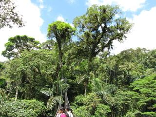 Regenwald - Arenal Hanging Bridges - Costa Rica