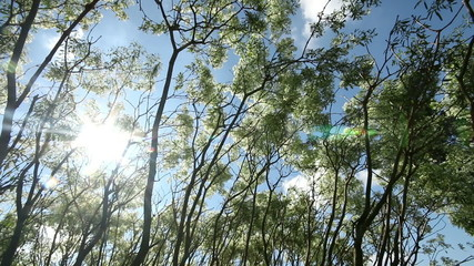 Tree leaves and branch in breeze, sun ray light background.