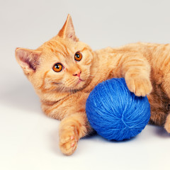 Cute kitten playing with clew