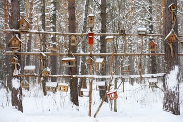 Among coniferous forests hanging feeders for birds. In cold weat