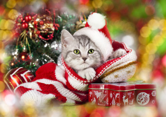 Christmas kitten in santa hat