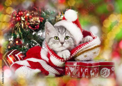 Tuinposter Kat Christmas kitten in santa hat