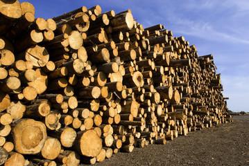 Holzstapel als Vorrat in Schweden