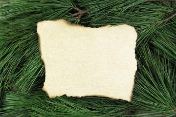 vintage blank card on fir tree