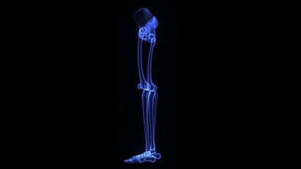 Lower limb