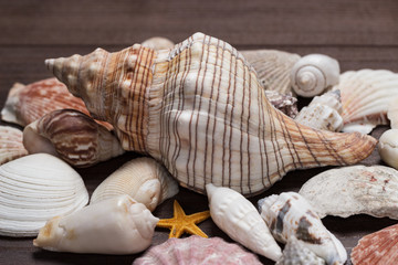 seashells over brown wooden background
