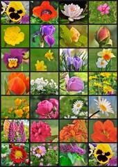 planche photos fleurs