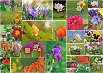 différentes variétés de fleurs