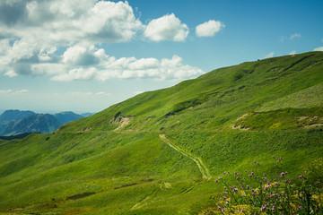 summer green grass and blue sky mountain landscape