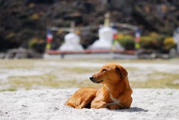 Red dog and buddhist stupas