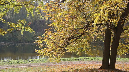 Beautiful autumn tree on the river bank in park