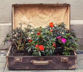 vintage suitcase flower