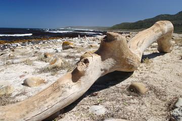 costa spiaggia del sudafrica città del capo