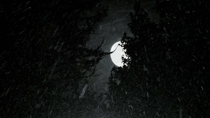 Snowfall in the spruce forest at night with a full moon.