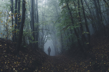 mysterious forest scene with man on dark path