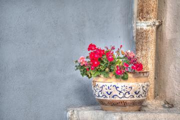 flower pot in a rustic corner