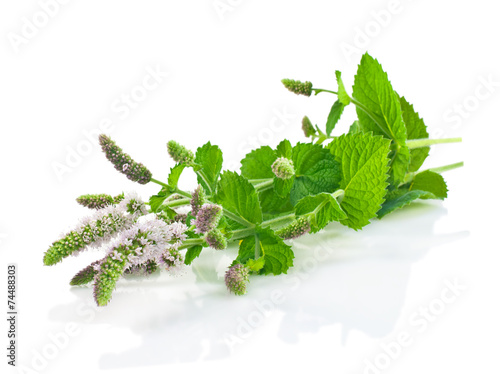 Papiers peints Herbe, epice Flowers and leaves of fresh mint on a white background.