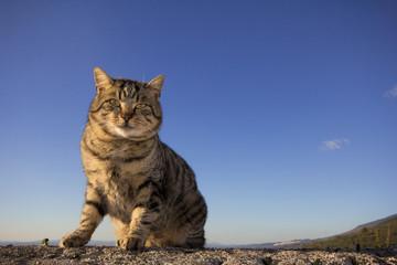 Gatto isolato sul cielo