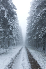 misty winter forest trail