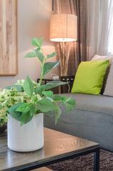 plants in white ceramic vase in living room