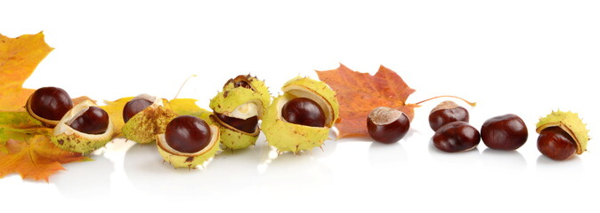 Group of many chestnuts in line with autumn leaves