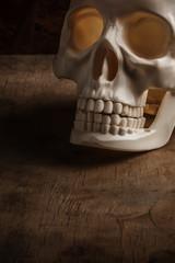 Skull on wood